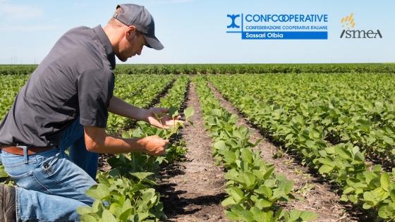 Nuove misure di finanza agevolata ISMEA: pubblicato il bando per gli investimenti nell'agroalimentare