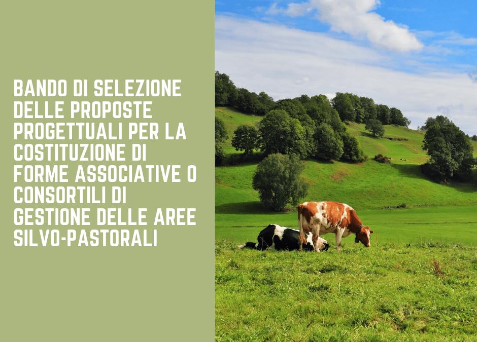 Dal MiPAAF online il Bando di selezione delle proposte progettuali per la costituzione di forme associative o consortili di gestione delle aree silvo-pastorali.
